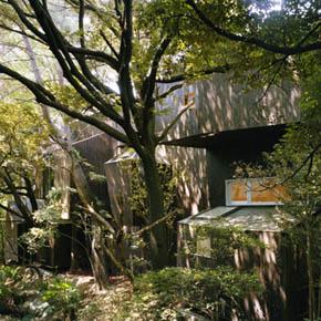 090828-forest.jpg
